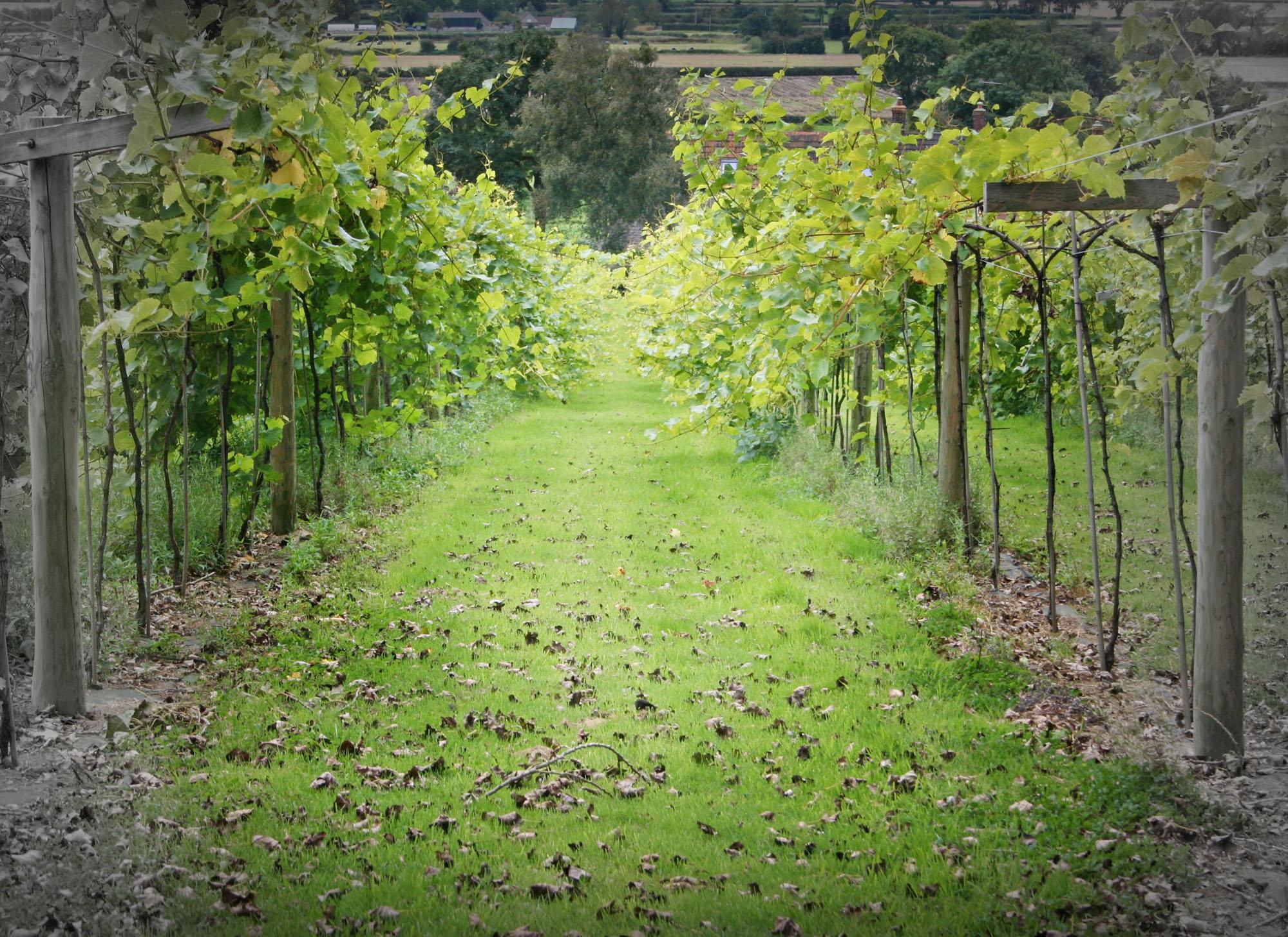 Swansfoot Fine Wines Vineyard Fade