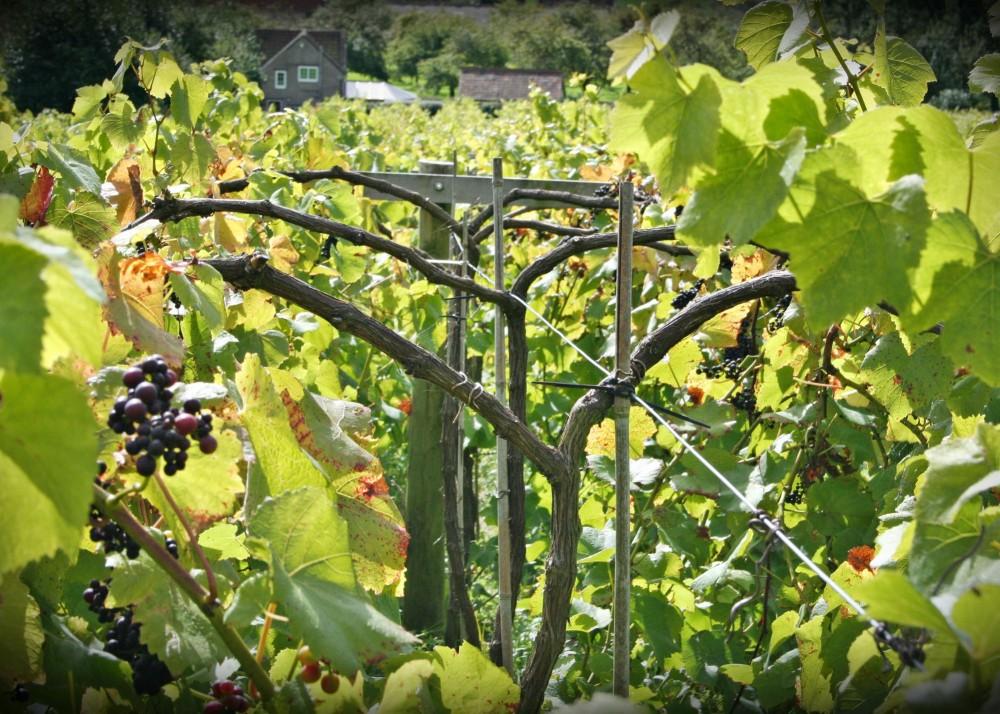 Swansfoot Fine Wines Vineyard